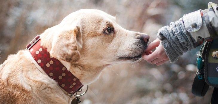 hond vriendschap