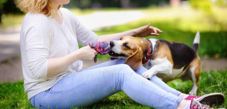 beagle trekt aan touw
