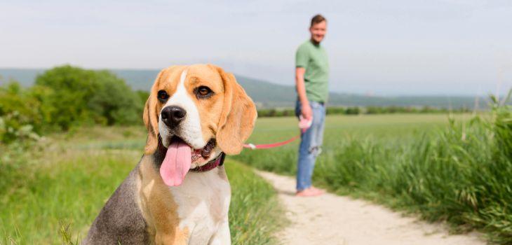 lopen met je beagle