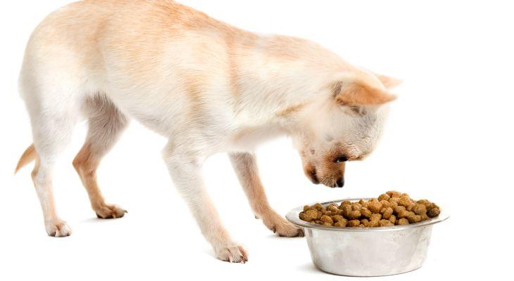chihuahua eten verzorgen