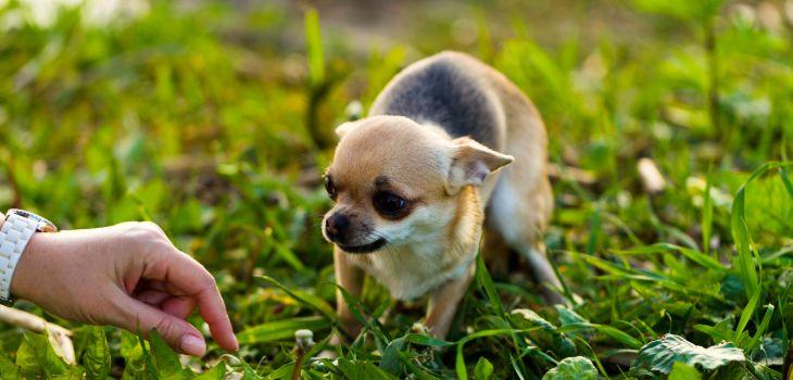 wandelen met bange hond
