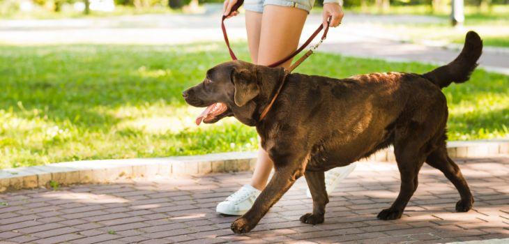 Wandelen met angstige hond