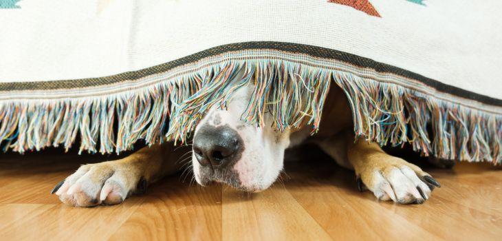 onzekere hond zelfvertrouwen geven