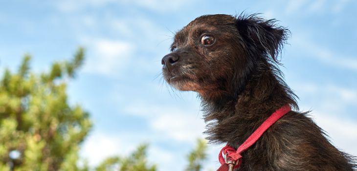 angstige pup