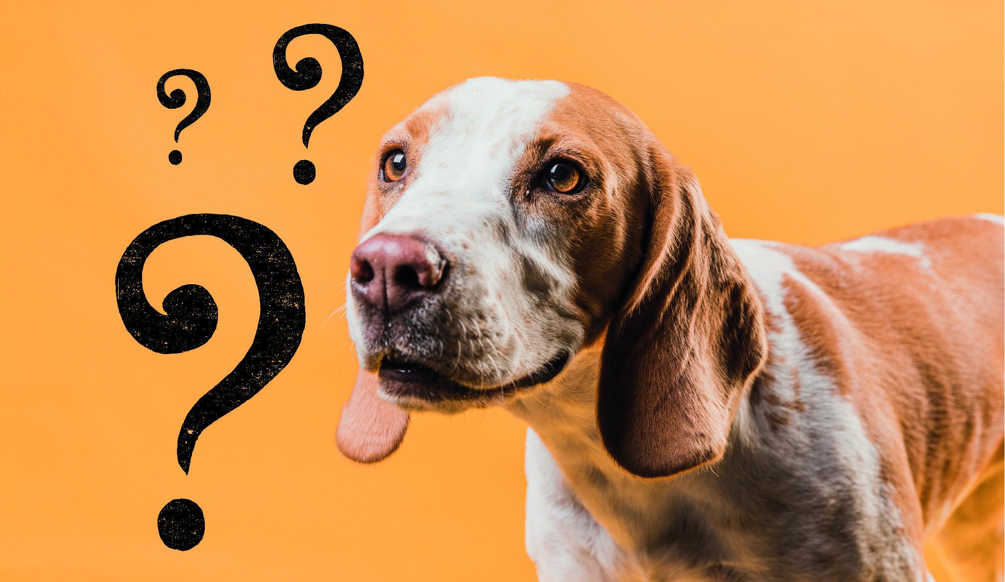 gedachten van een hond